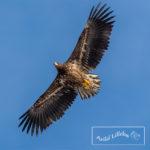 Runde Boattrip Eagle Arild Lilleboe
