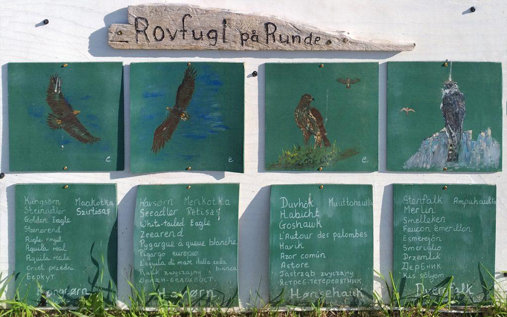 Runde Boattrip Rovfugler