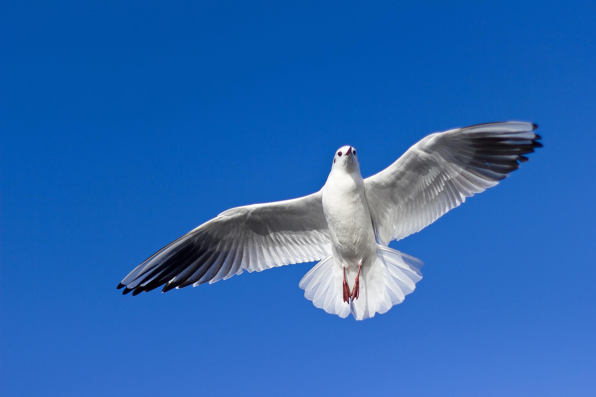 Runde Boattrip Seagull